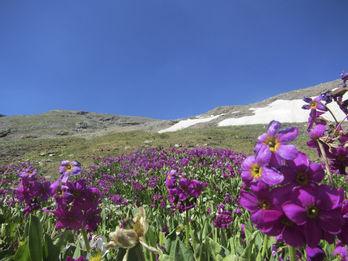 wbx flowers