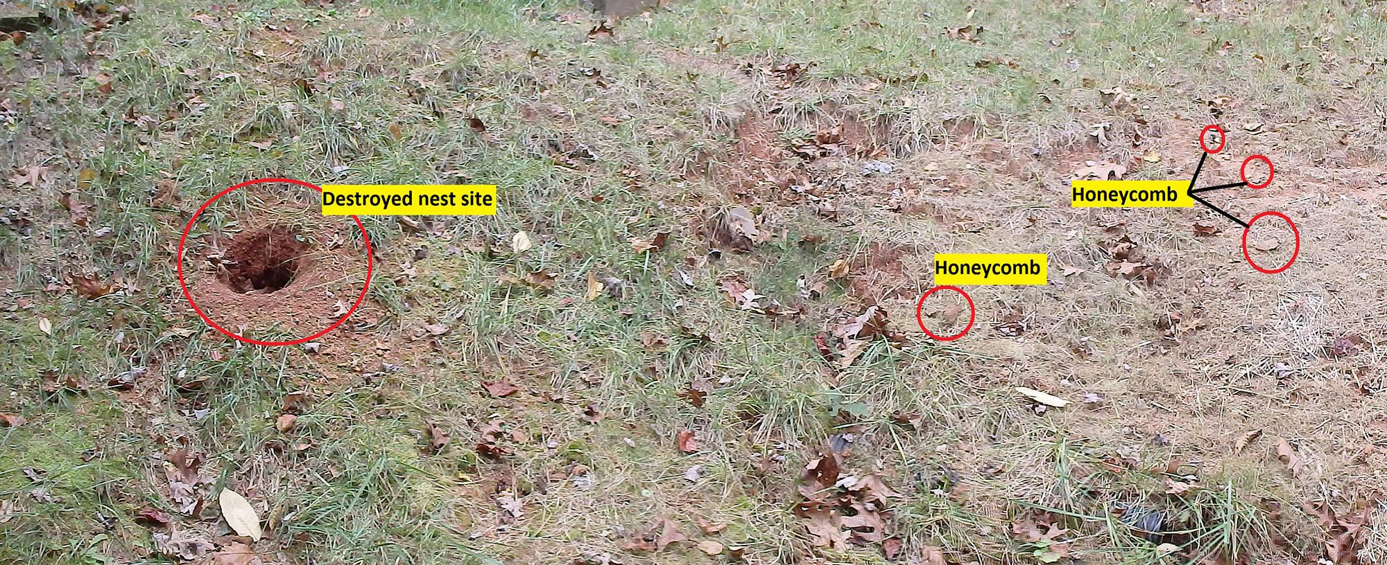 Kill yellow jackets in the ground - Kill Yellow Jackets In The Ground 53