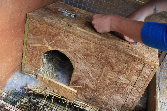 The nest box within the bunny yard