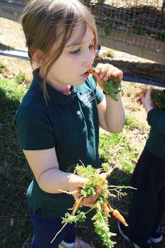 Student enjoying fresh carrots