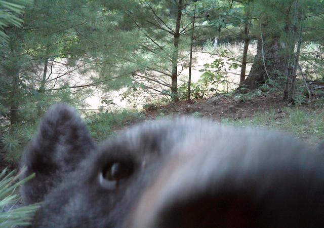 Sneaky Bear
