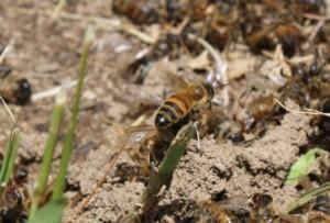 bee crop2